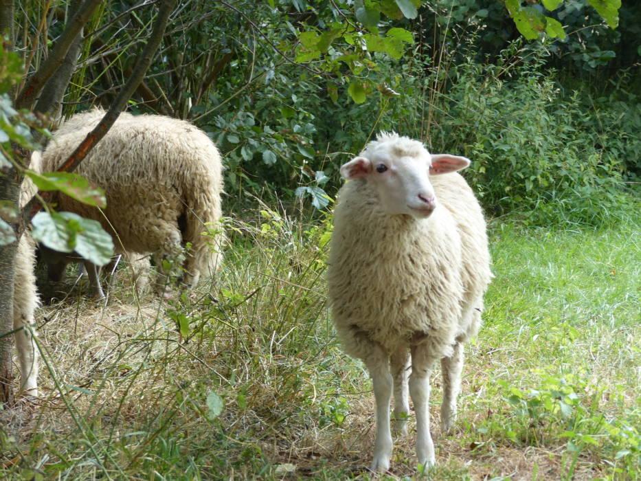 Herbsttag / Thementag: Rund ums Schaf