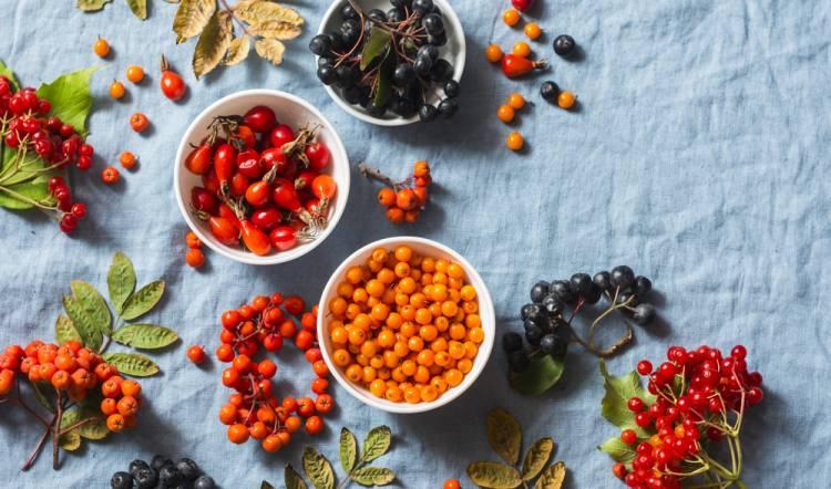 Wildkräuterführung: Herbstfrüchtchen – Herbstkräuter – mit Picknick